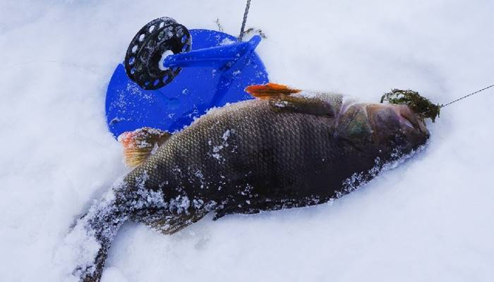 ловля окуня зимой на урале видео
