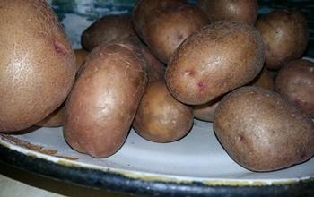 Картошка на карпа