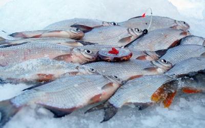 Ловля голавля зимой со льда