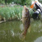 Как ловить ротана