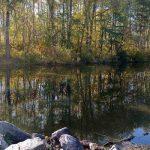 На что ловить сазана осенью