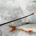 На что ловить плотву зимой